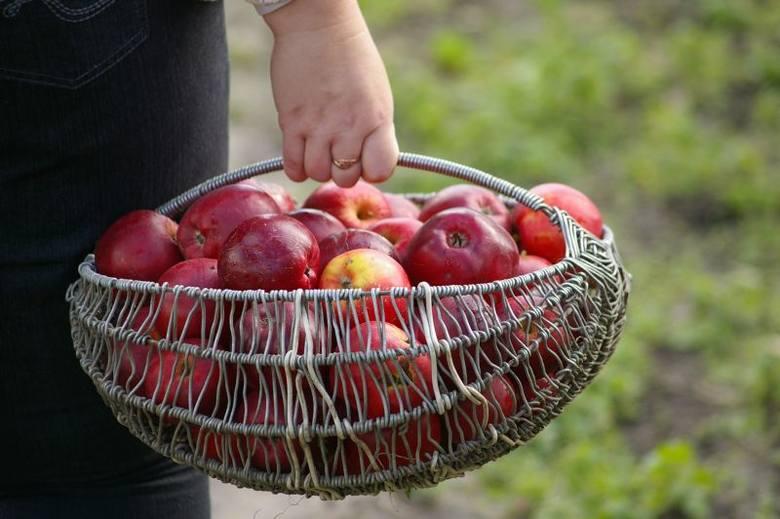 Stowarzyszenie Droga chętnie przyjmie darmowe jabłka