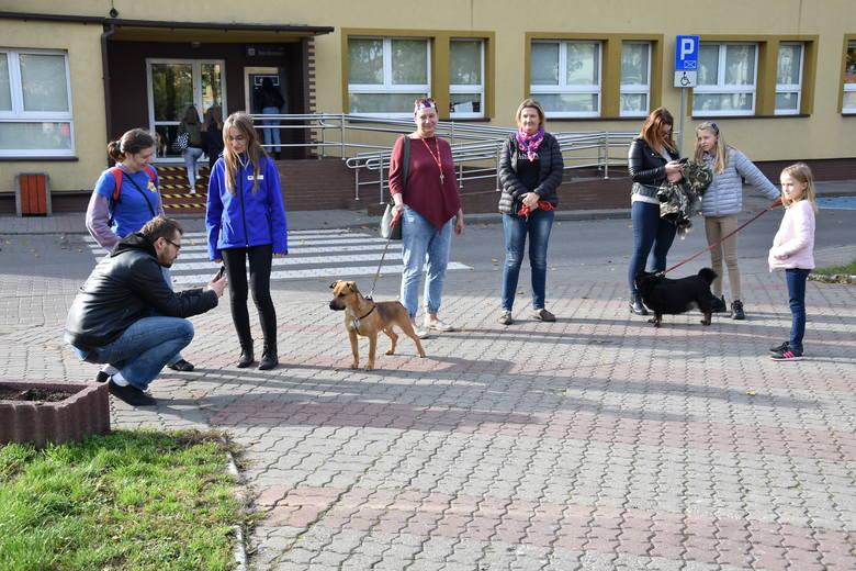 Dzień Kundelka w Golubiu-Dobrzyniu