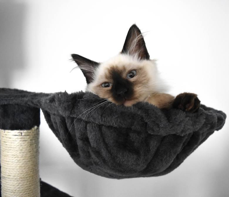 Koty to zwierzęta, które przywiązują się do miejsca. Nie lubią konkurencji, zwłaszcza na ich terenie. Warto zadbać o to, żeby zwierzak miał swoje mi