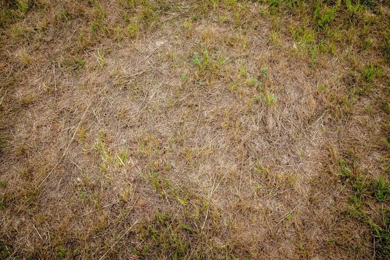 Nawet w ubiegłym roku o tej porze na polach nie było aż tak sucho. Rolnicy chcą ogłoszenia stanu klęski żywiołowej