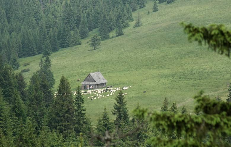 Na szczycie Turbacza znajduje się schronisko turystyczne. Jest ono mocno oblegane przez turystów - i to niemal przez cały rok.