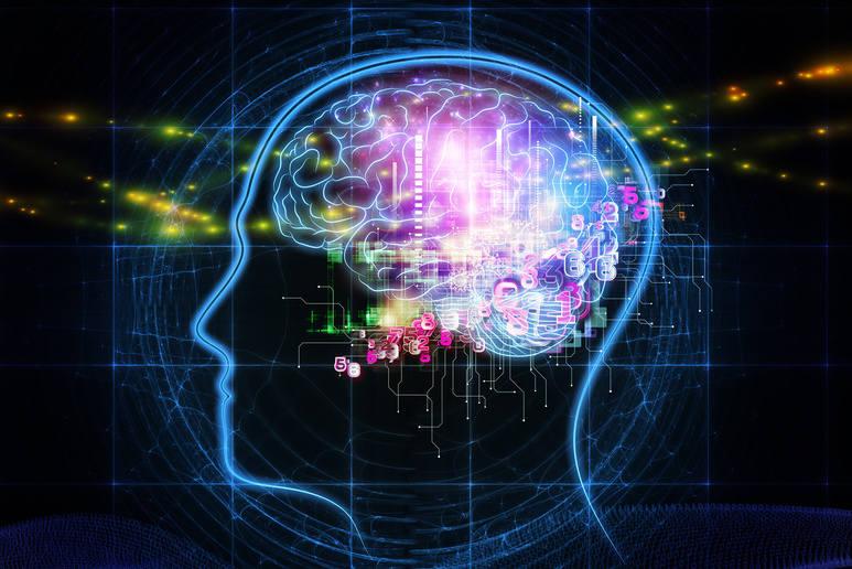 Mózg kobiet a mózg mężczyzn. Różnice