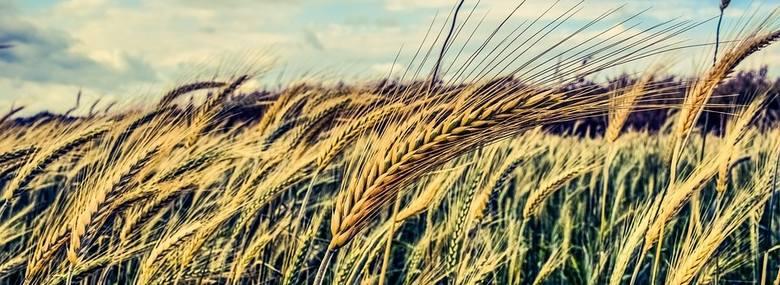 Ubezpieczenia upraw i budynków w gospodarstwie - na co zwracać uwagę?