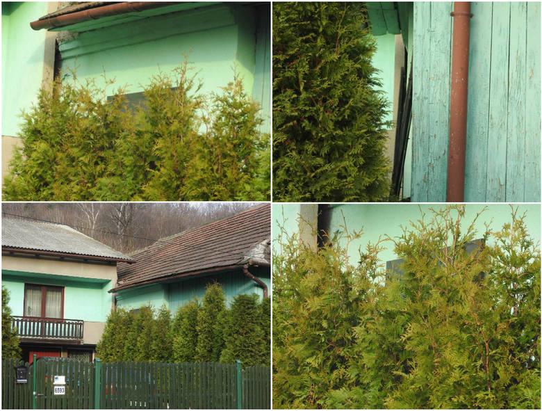 Józefa Matejko z rodziną żyją cały czas po ciemku. W domu mają tylko jedno odsłonięte okno. Domy dwóch rodzin stoją ściana w ścianę.