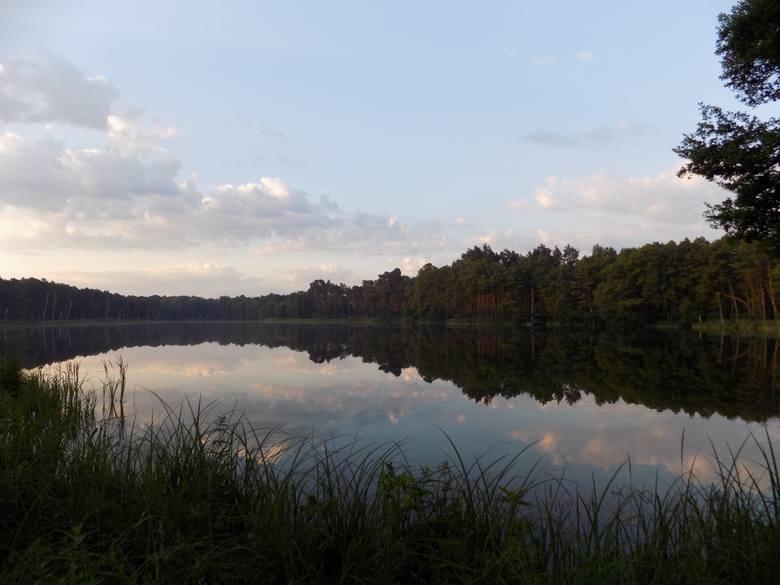 Typowe siedlisko bielików – las  z jeziorami, obfitującymi w ryby i wodne ptactwo.