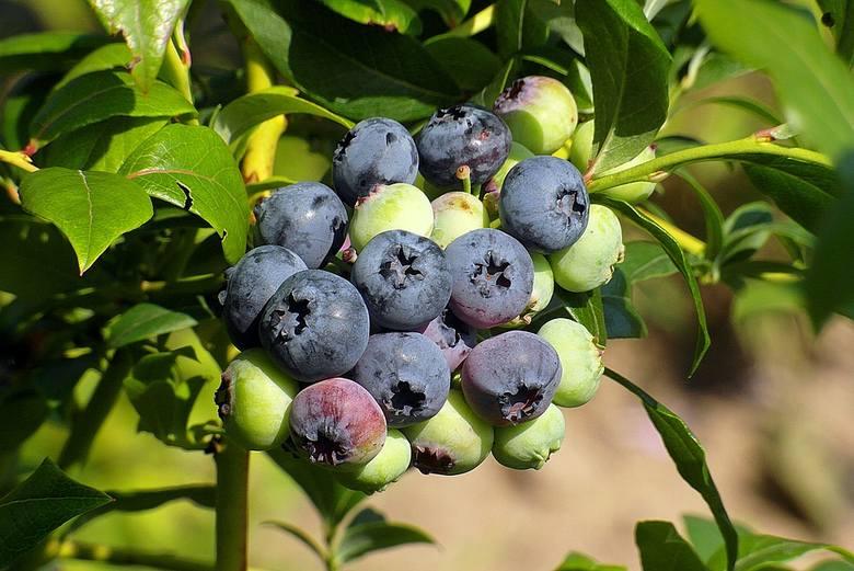 Sięgasz czasem po nieumyte owoce? Odradzamy. Na ich powierzchni czyhają bakterie, pasożyty.