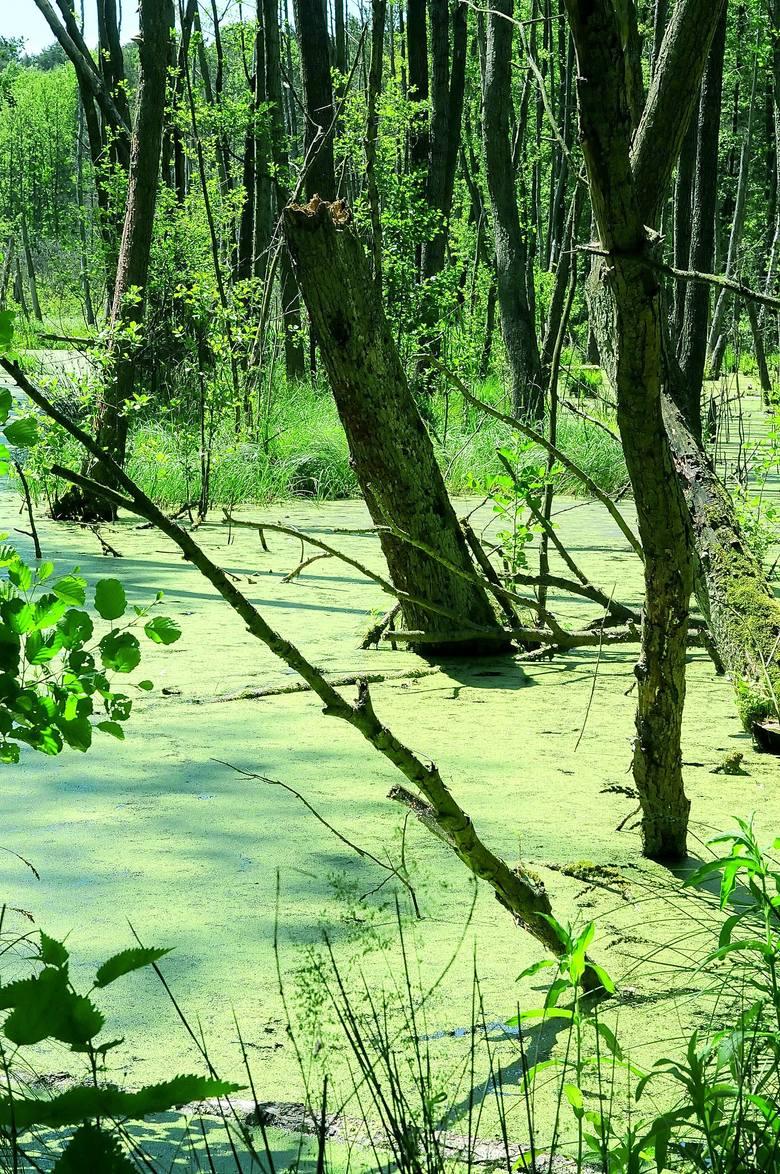 <i>Natura 2000 to program utworzenia w krajach Unii Europejskiej sieci obszarów objętych ochroną przyrody. W ramach programu wyznaczone zostają tzw. obszary specjalnej ochrony ptaków oraz specjalne obszary ochrony siedlisk, na których obowiązują ochronne regulacje prawne.</i>