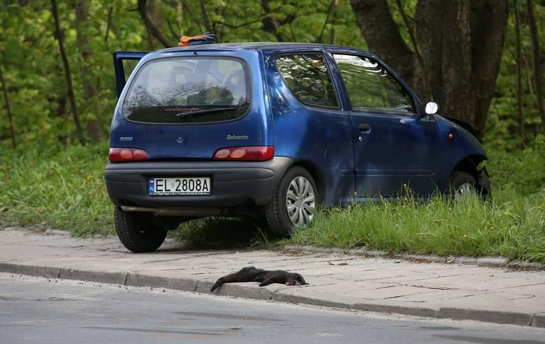 Wypadek przez czarnego kota