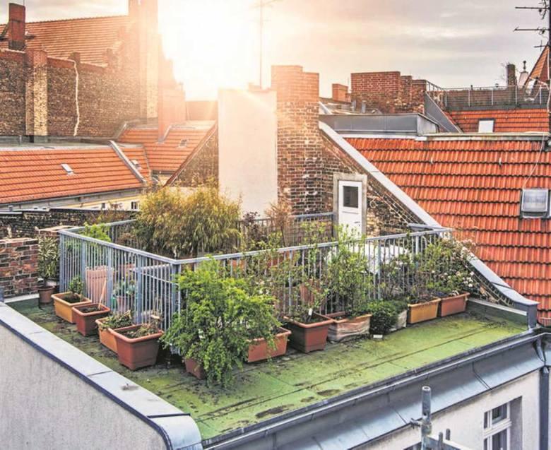 Warstwy drenażu, podłoża i rosnących roślin to dodatkowe obciążenie - dach pod ogród powinien mieć solidną konstrukcję