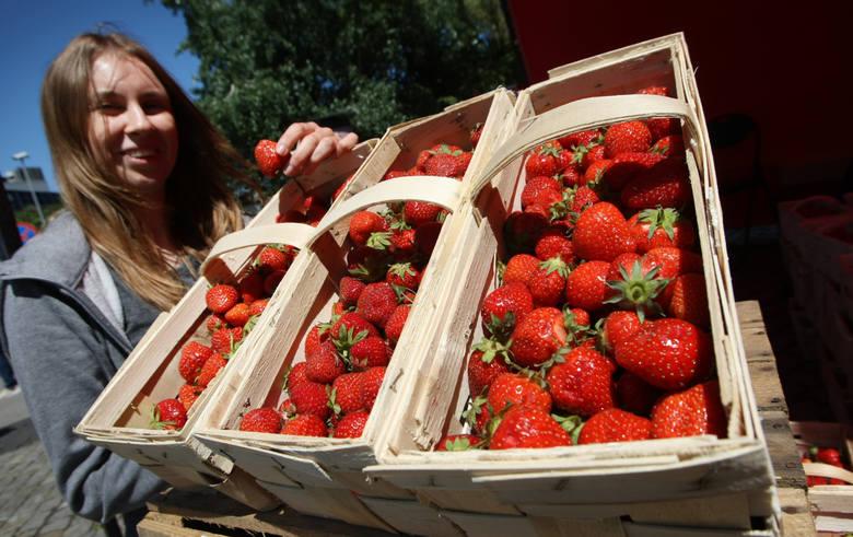 Zbiory truskawek - to jedna ze standardowych prac sezonowych w Polsce<br />