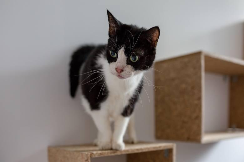 Kot był szwagra, ale po sąsiedzku odwiedzał Andrzeja Cz. Pewnego sierpniowego dnia załatwił się w pokoju mężczyzny. Ten chwycił za wiatrówkę i jednym
