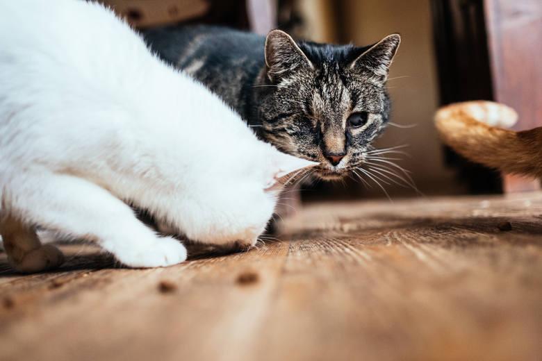 Niewidome koty w Fundacji Ja paczę sercem