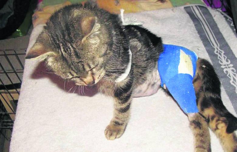 Jeden z podopiecznych  Radomszczańskiego Towarzystwa Opieki nad Zwierzętami. Tofik w listopadzie został podrzucony na klatkę schodową, konieczna była