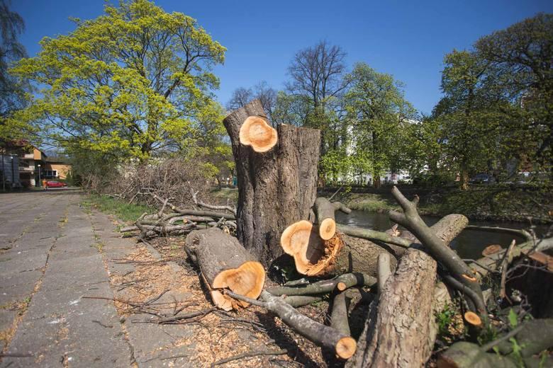 Widok z Mostu Zamkowego już nie będzie taki jak dawniej. Na terenie, o którym mowa w sumie jest 900 drzew. 174 zostaną usunięte. Nasadzonych nowych będzie