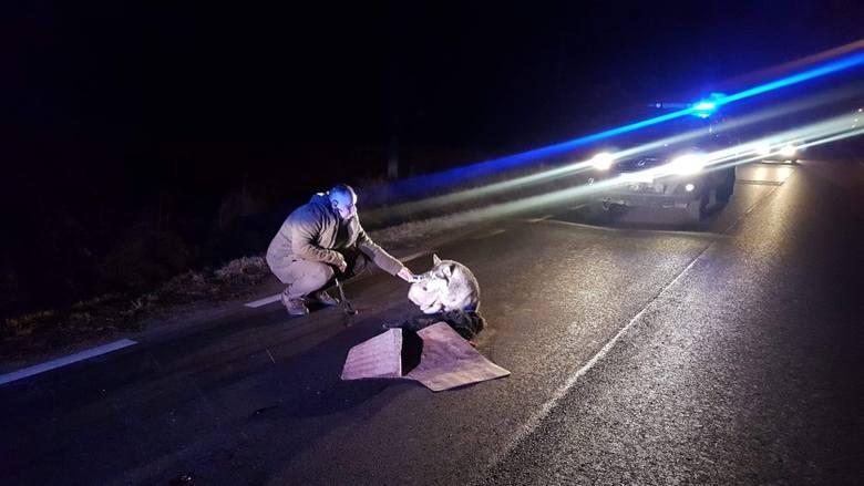 Pies w typie malamuta leżał cały dzień na ulicy i pilnował swojego zabitego przyjaciela. Ponieważ urzędnicy z gminy nie pomogli zwierzakowi, na pomoc