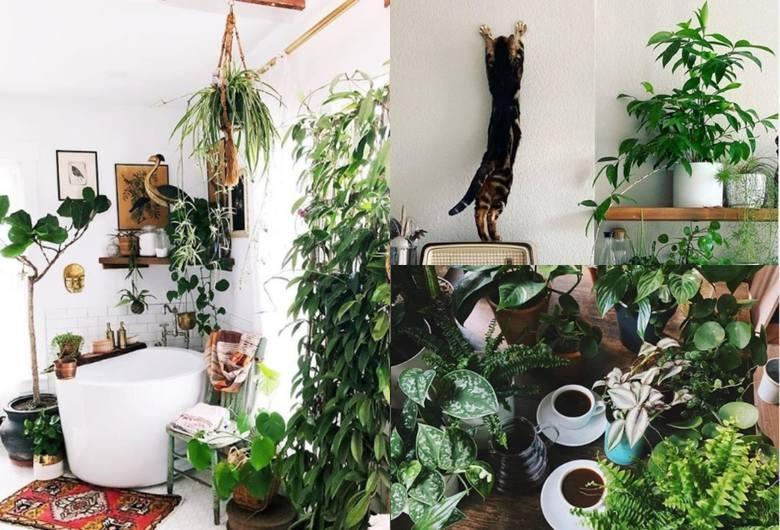 Te zdjęcia zachwycą każdego fana roślin (i nie tylko)! Najpiękniejsze roślinne profile na Instagramie