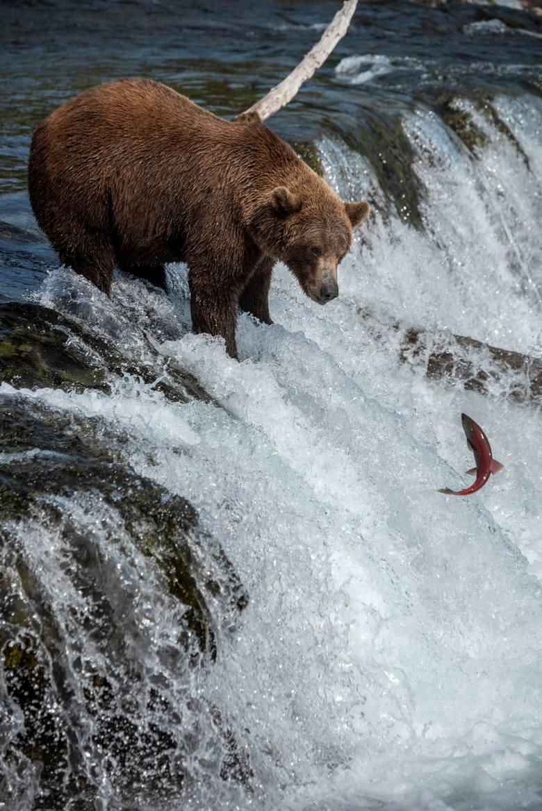 Więcej zdjęć z wyprawy można zobaczyć na blogu podróżników: www.thevanescape.com.<br /> <strong>W piątek opublikujemy rozmowę z podróżnikami.</strong> Zapytamy, jak prawić komplementy niedźwiedziom? Czy łatwo jest spotkać za oceanem innych Polaków, którzy nie uznają wycieczek organizowanych przez biura...