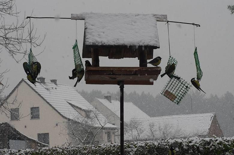 Zima i pierwszy śnieg okiem naszego Czytelnika Rajmunda Ociepy. Te zdjęcia robią wrażenie!