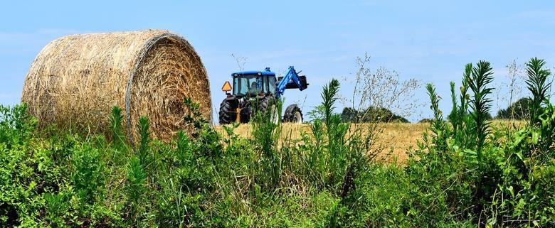 Podatek rolny w 2020 roku może być wyższy, bo wyższa jest średnia cena skupu żyta