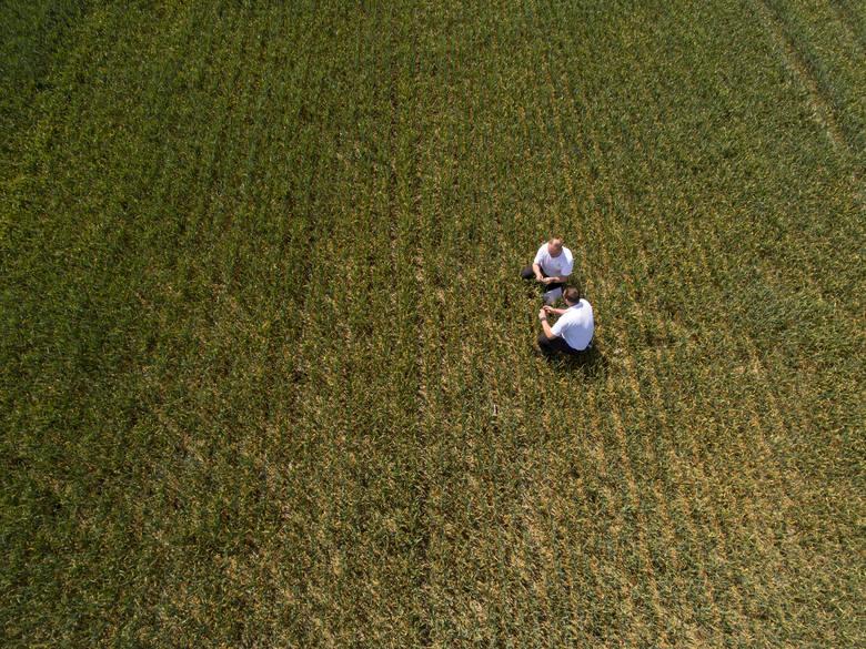 Jesteś właścicielem gospodarstwa rolnego? Wybierz ubezpieczenie zabezpieczające przed gradem, ulewnymi deszczami i huraganem