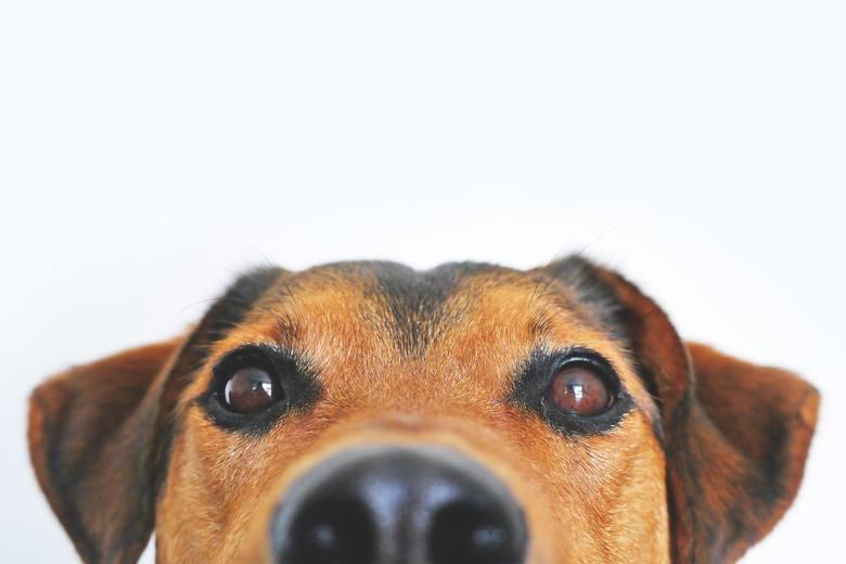 Znęcanie się nad zwierzętamiDręczenie zwierząt stało się oficjalnie grzechem ciężkim. I nie chodzi tu tylko o sytuacje ekstremalne, jak skatowanie psa.