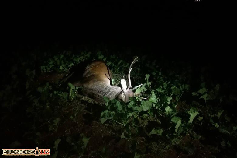Zderzenie z jeleniem na DK 42 pod Wołczynem.