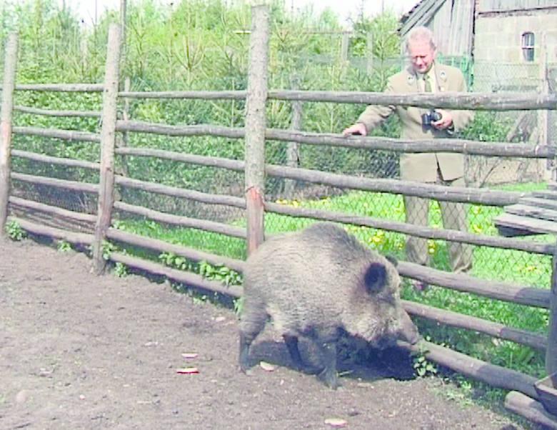 Myśliwi podkreślają, że zwierzęta powinny zamieszkać tam, gdzie ich miejsce, czyli w leśnych ostępach.