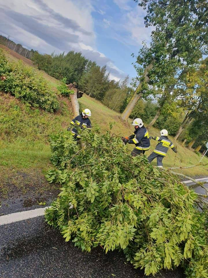 W całym regionie koszalińskim panuje bardzo wietrzna pogoda. Strażacy informują o powalonych drzewach m.in. w okolicy Kołobrzegu, Koszalina i Sławna.Najwięcej