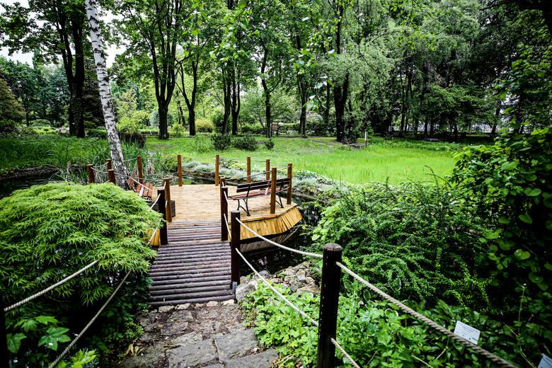 Miejski Ogród Botaniczny w Zabrzu znów jest otwarty dla zwiedzającychZobacz kolejne zdjęcia. Przesuwaj zdjęcia w prawo - naciśnij strzałkę lub przycisk