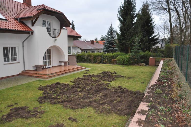 Zdjęcia zrytej posesji przy ul. Nowojędrzychowskiej w Zielonej Górze
