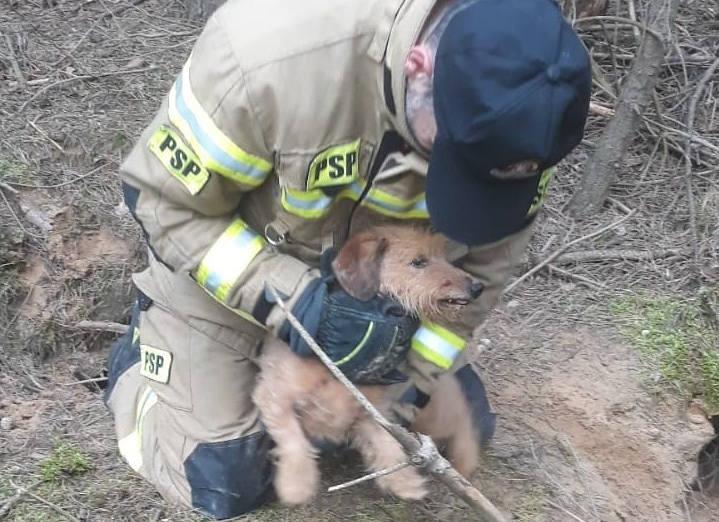 To była nietypowa interwencja dla strażaków w Zielonej Górze. We wtorek, 13 kwietnia, otrzymali informację o psie, który utknął w zwierzęcej norze. Strażacy