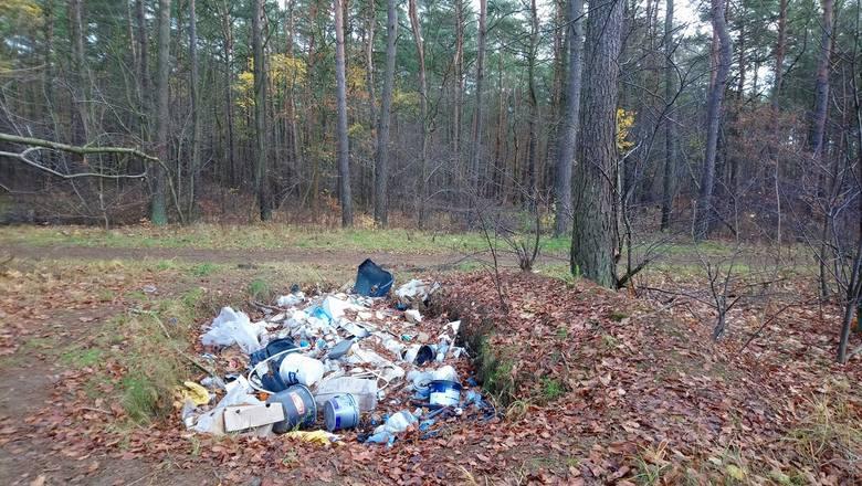 Tak wygląda fragment lasu na Kapuściskach - odcinek między ul. Szpitalną a Ks. Prał. Romualda Biniaka.