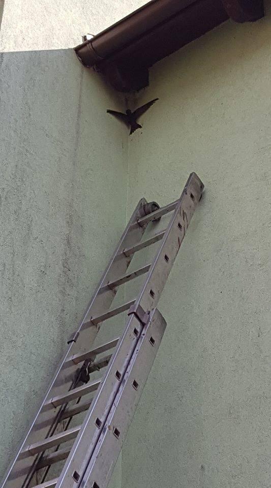 Nietypowa akcja strażaków z OSP Wiele. Pojechali, żeby ratować... ptaszka [ZDJĘCIA]