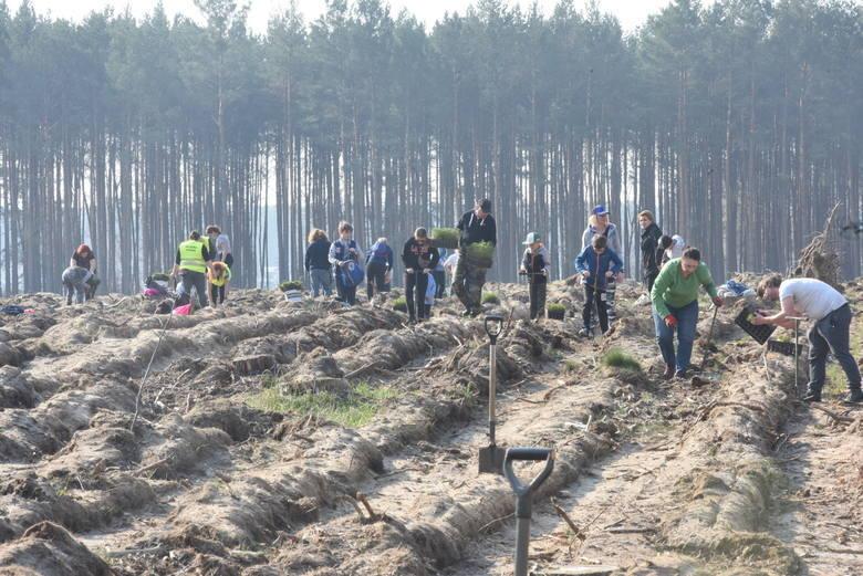 """Zdjęcia z akcji """"Posadźmy las razem"""" (Zielona Góra Przylep - 2019), którą przez lata organizowało Nadleśnictwo Zielona Góra i Przytok."""