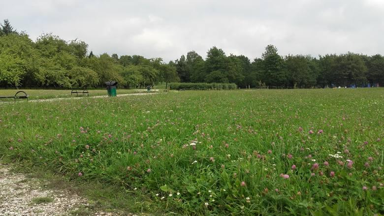 Zarząd Zieleni Miejskiej wskazuje także, że łąka kwietna powstała również na Cytadeli. Przejdź do kolejnego zdjęcia --->