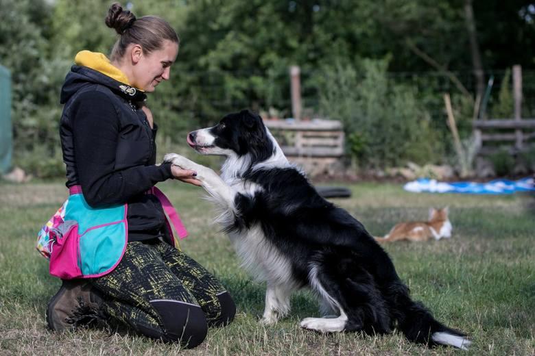 Pies Zen na krakowskim lotnisku koi nerwy pasażerów