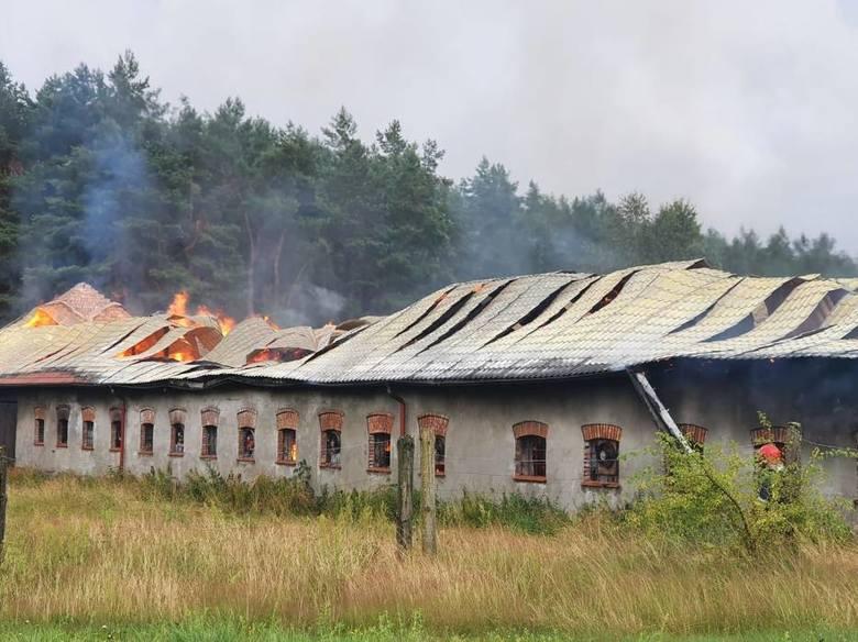 W Barnowie pożar wybuchł w budynku inwentarskim. Ewakuowano zwierzęta