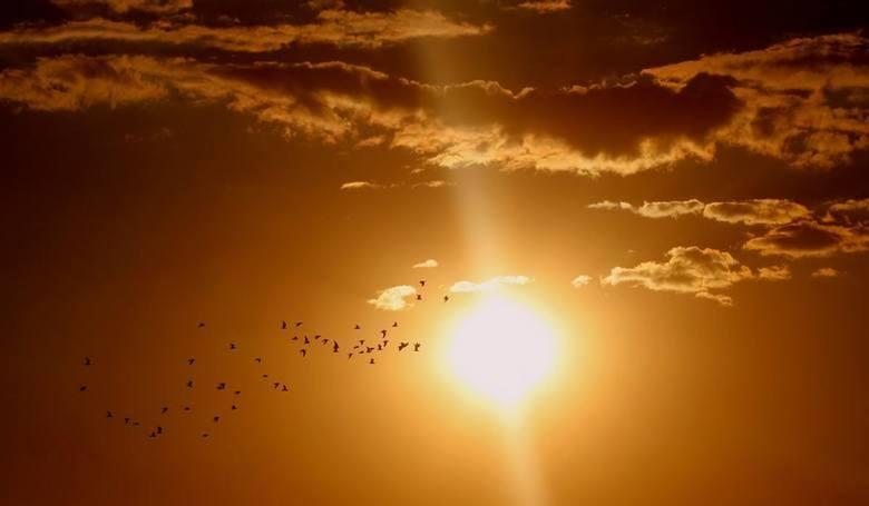 Ponad 30 st. C w cieniu już od środy, 24 lipca, będą wskazywały termometry w naszym regionie. Także noce będą wyjątkowo ciepłe. Wszystko za sprawą zwrotnikowego