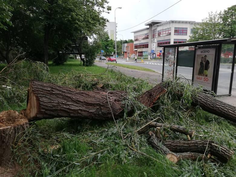 Drzewo runęło w okolicach przystanku MPK na ul. Popowickiej