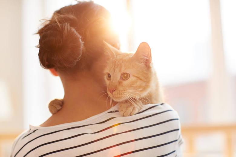 Te rasy kotów są najbardziej uczuciowe. Zachowują się bardziej jak psy niż koty! Doskonali towarzysze na co dzień