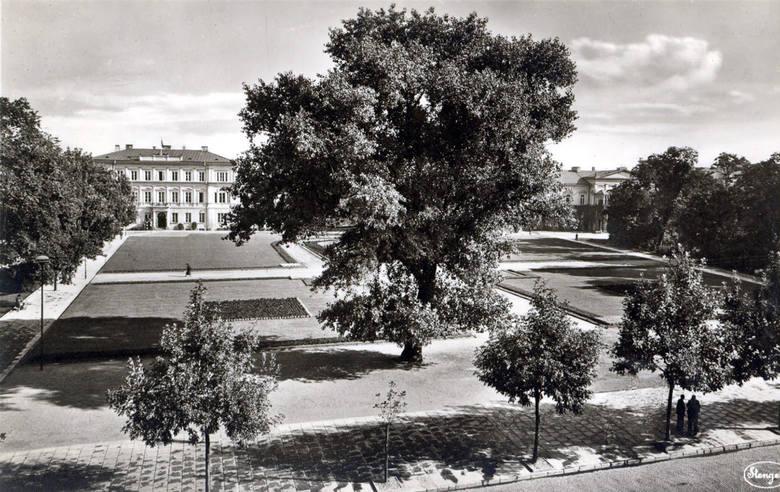 To samo drzewo w centrum propagandowej niemieckiej pocztówki wydanej ok. 1941 rok