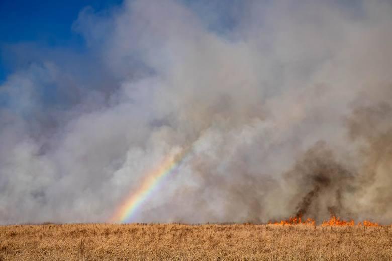 Pożar Biebrzańskiego Parku Narodowego 2020