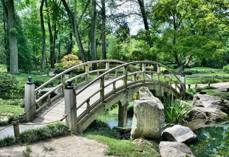 Łąki kwietne, ogrody deszczowe i miejskie pasieki mają powstać w Katowicach. To projekty Zielonego Budżetu. W sumie jest ich 128