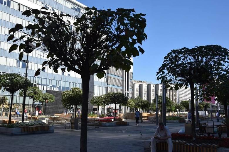 Z placu Kwiatowego na katowickim rynku prawdopodobnie znikną surmie. Drzewa chorują i nie wyglądają najlepiej, a terapia zastosowana przez służby miejskie