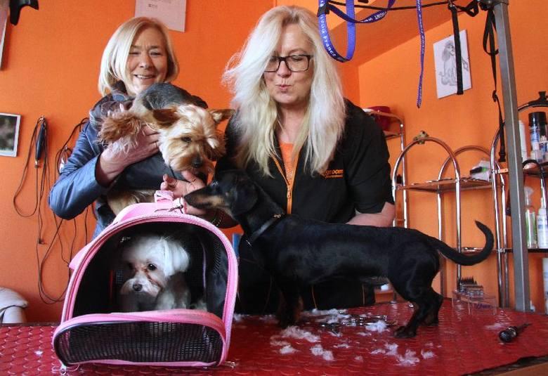 Przed świętami oblężenie w kieleckim salonie piękności dla psów. Było wiele znanych osób oraz…DodaWłaścicielka Omni, Elżbieta Pytlik ze swoim Dyziem