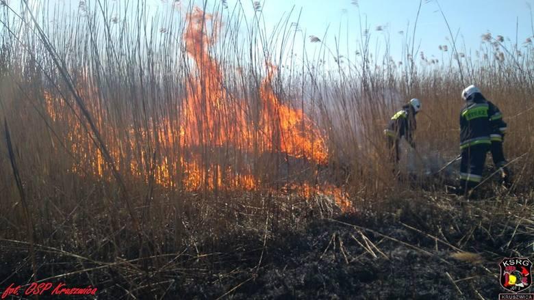 Akcja trwała 4 godziny. Ogień strawił około 15 hektarów trzciny