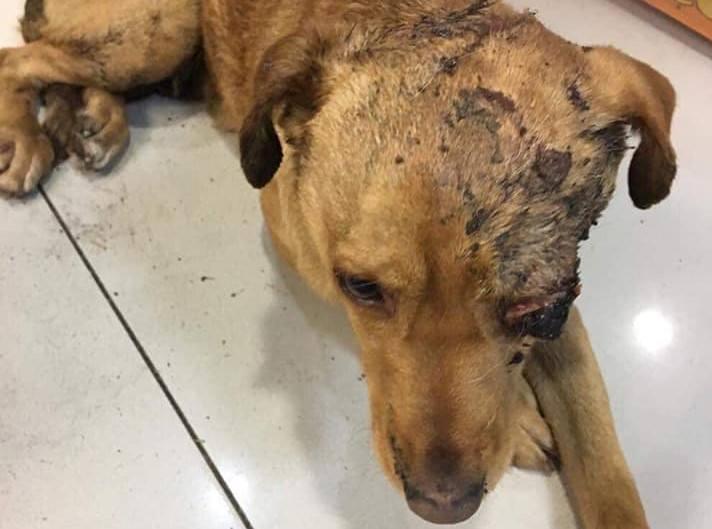 Pies został znaleziony w okolicach wsi Borowiec (powiat nowosolski) zakopany w ziemi. Żył. Wystawały tylko łapy. Udało się porozmawiać z mężczyzną, który
