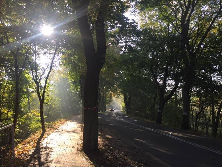 W ubiegłym tygodniu pisaliśmy o planowanej wycince drzew na grobli w Puszczykowie. Drzewa miałyby zniknąć, gdy powstawać będzie nowa ścieżka rowerowa wzdłuż ul. Poznańskiej. Mówiło się nawet o wycięciu 43 drzew, w tym wielu leciwych i cennych przyrodniczo.