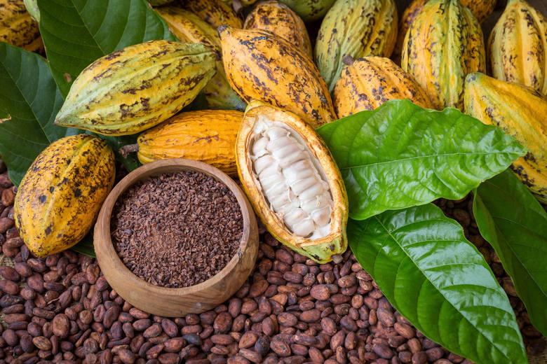 Kakao stało się europejskim przysmakiem dopiero za sprawą wypraw Hernando Corteza, który sprowadził je na hiszpański dwór w pierwszej połowie XVI wi