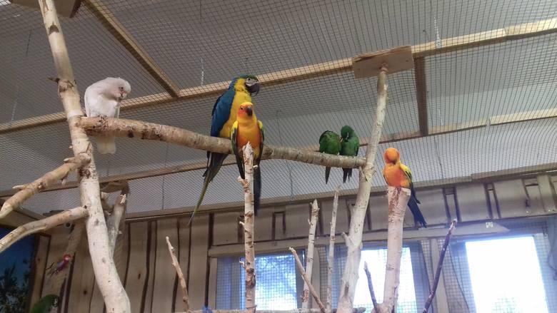 Wątpliwości internautów budzą m.in. warunki, w których przebywają ptaki